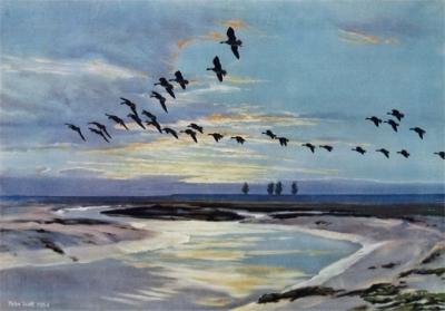 Peter Scott - 'The Wash At Dawn' - wild geese