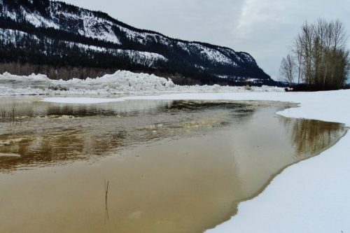 January 1st, 2014. Ice coming down the Fraser River has piled up a mile or so downstream, causing an ice dam and upstream flooding of our lower fields.