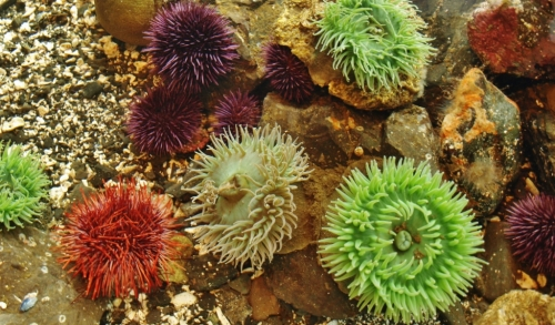 And then there's wonderful stuff like this: urchins and anemones at Ucluelet.