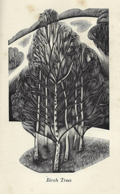 Birch Trees - engraving by John Farleigh - from A Country Garden by Ethel Armitage, 1936