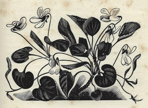 Violet - by John Farleigh - from A Country Garden by Ethel Armitage, 1936